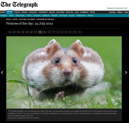 The Telegraph (England)