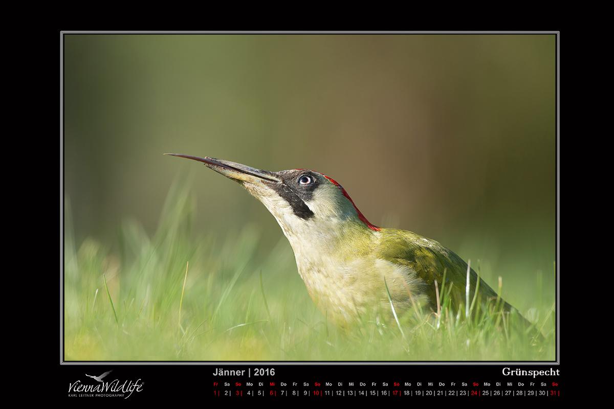 Vienna Wildlife Kalender 2016