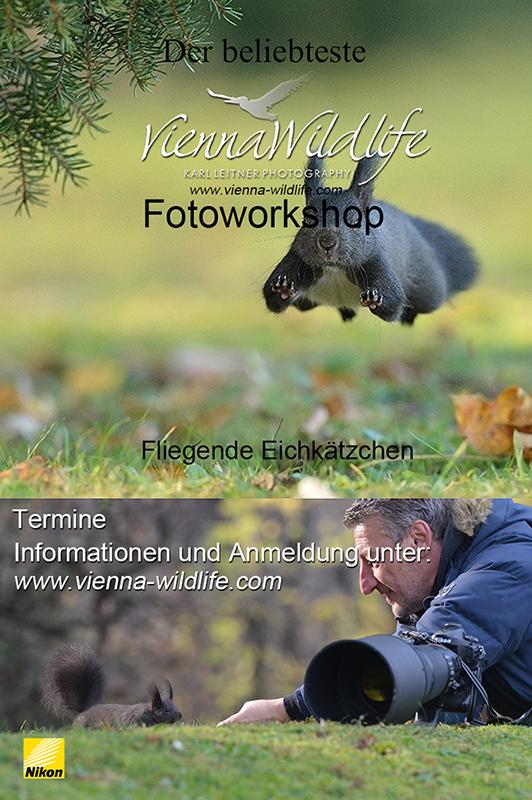 Eichhörnchen Workshop