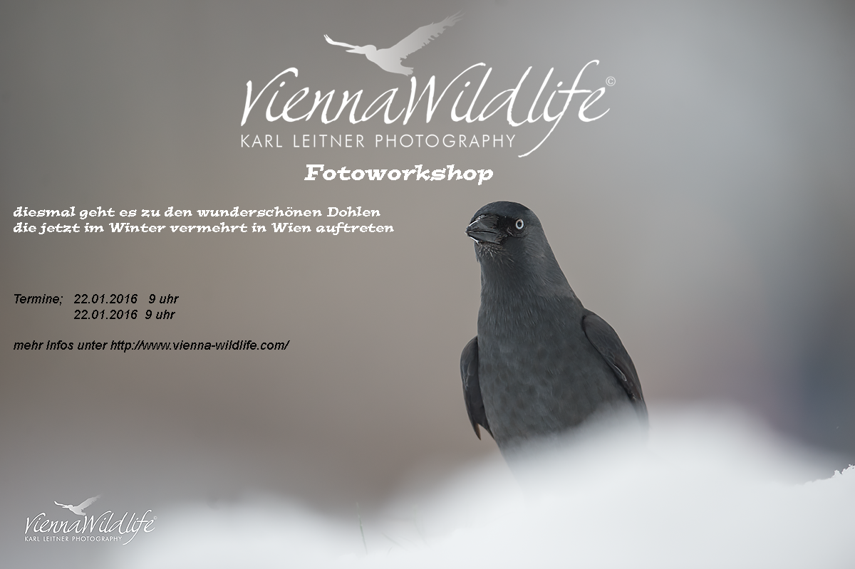 vienna wildlife naturfotoworkshop