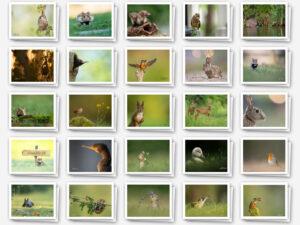Vienna Wildlife-Memoryspiel