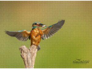 Vienna Wildlife Fotopuzzle
